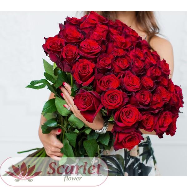 Роза Эксплорер 65 см