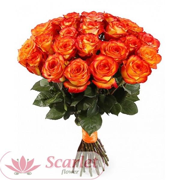 Роза Хай Меджик 65 см.