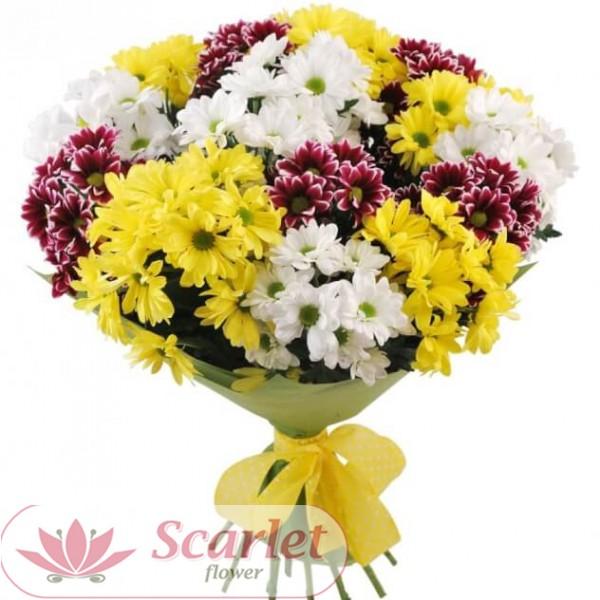 Хризантема  кустовая Гайдар