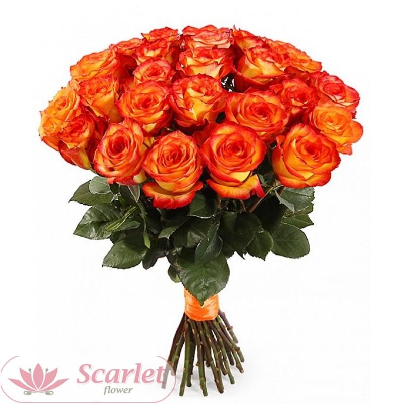 Роза Хай Меджик 65 см. Поштучно.